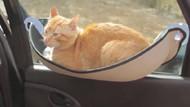 Kedilerin araç seyahatlerinde rahat etmesi için düşünülmüş muhteşem hamak