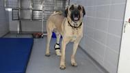 Ayağı kesilen köpeğe, 3 boyutlu yazıcıdan protez