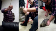 Ünlü iş adamından kediye sopalı işkence