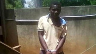 Keçiye tecavüz ederken yakalandı, savunması pes dedirtti
