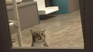 Kapıları açıp kedileri özgürleştiren Asi kedi Quilty'ye hücre cezası