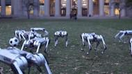 Robot köpeklerin futbol maçı şaşkına çevirdi: Black Mirror sahnesi gibi