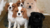 Belediye Başkanı köpeklerin havlamasını yasakladı
