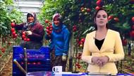 Kanal D Haber tanzim satıştan şikayetçi üreticiyi nasıl memnun gösterdi?