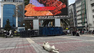 Sokak köpeği ekrandaki yemek reklamlarını böyle izledi