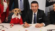 CHP Beşiktaş Adayı Rıza Akpolat ve köpek Bella hayvan hakları için buluştu
