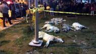Ankara'da telef olan köpek sayısı 16'ya çıktı, beyaz renkli otomobil aranıyor