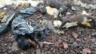 Ankara'da çöp torbalarındaki köpeklerin açlıktan öldüğü iddiası