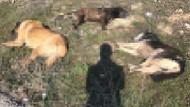 Ankara'da 7 köpek, zehirli sosislerle telef edildi iddiası