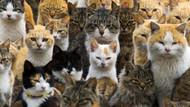 İki milyon kediyi zehirli sosisle öldürecekler