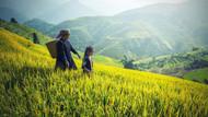 Çin genetiği değiştirilmiş yeni bir pirinç türü geliştirdi