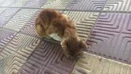 İşkence yapılarak gözü oyulan yavru kedi tedaviye alındı