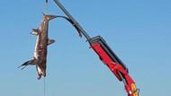 Fethiye'de üçer metrelik 2 köpek balığı balıkçıların ağına takıldı