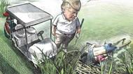 Trump'ı eleştiren karikatürist 17 yıllık işinden kovuldu