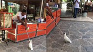 Papağanın dondurmayla  imtihanı