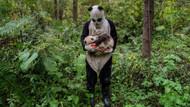 Eski savaş fotoğrafçısı artık pandaları çekiyor!