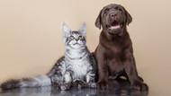 Kedi ve köpeklerle geçirilen 10 dakika bile stres düzeyini düşürüyor