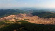 Kaz Dağları'nda ağaç katliamı yapan şirkete 865 milyonluk teşvik