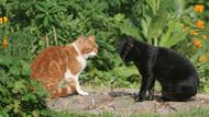 Arka bahçesinde sahipsiz kedi besleyen kadına hapis cezası