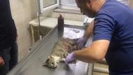 Hamile kediyi öldüren Pitbull'un sahibine 7802 TL ceza kesildi