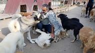 Melekler Şehri Sokak Hayvanları Barınağından hayvanseverlere kuru ve yaş mama çağrısı