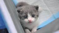 Dünyanın ilk klon kedisi doğdu