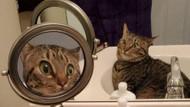 Ayna karşısındaki görüntüsünü tanıyamayan kedi, sosyal medyada viral oldu