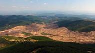 Ahmet Hakan'dan Kaz Dağları tepkisi: Fidan diktik diyerek savunma yapmayın