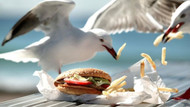 Martıların yiyeceklerinizi çalmasını önlemek için gözlerine bakın