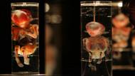 Ölen ünlü doktorun evinde 2 binden fazla fetüs bulundu