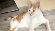 Kediye işkence edip kanıyla çeşme mermerine Arapça yazı yazdılar