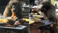 Restaurantı basan maymun oturup kıymalı makarna yedi