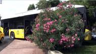 Freni patlayan İETT otobüsü ağaca tosladı