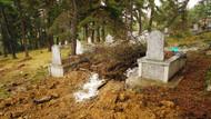 Aç kalan ayı mezar açıp ceset yedi