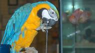 Küfreden papağana gözaltı!