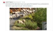 Şamil Tayyar'dan CHP'lilere koyunlu tweet