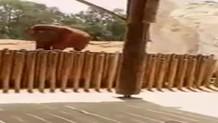 Filin attığı taş 7 yaşındaki çocuğu öldürdü