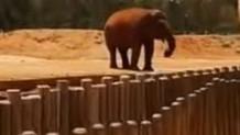 7 yaşındaki çocuk filin fırlattı taş yüzünden hayatını kaybetti