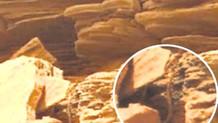 Mars'tan gelen son fotoğraf akıllara durgunluk verdi! Bu yaratık...