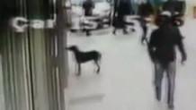 Marketin camına patisiyle vurup yemek isteyen köpek