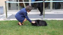 Sokak köpeği Karabaş soğuktan kaçtı meclise sığındı