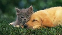 Petshop'larda kedi ve köpek satışına yasak geliyor