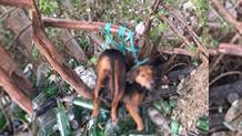 Bu köpeğe tecavüz edip öldürenler bulunsa bile para cezasıyla kurtulacak!