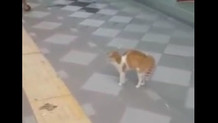 Adana'nın psikopatlığından nasibini alan sevimli kedi