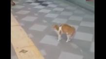 Adana'nın psikopat kedisi sosyal medyayı sallıyor