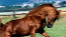 Ata tecavüz eden sapık: At bana göz kırptı!
