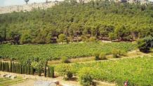 Atatürk Orman Çiftliği arazisinde üretim başlıyor