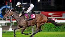 Şampiyon yarış atı icradan 70 Bin liraya satışta