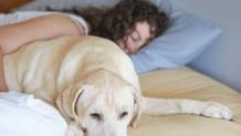 Kadınlar için bir köpekle uyumak bir erkekle uyumaktan daha iyi