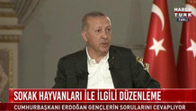 Erdoğan'a sokak hayvanları soruldu: Bizde cins köpeklerden var